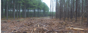 Fight environmental racism destroying forests and causing pollution